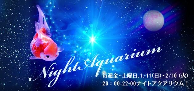 Night Aquarium_2015